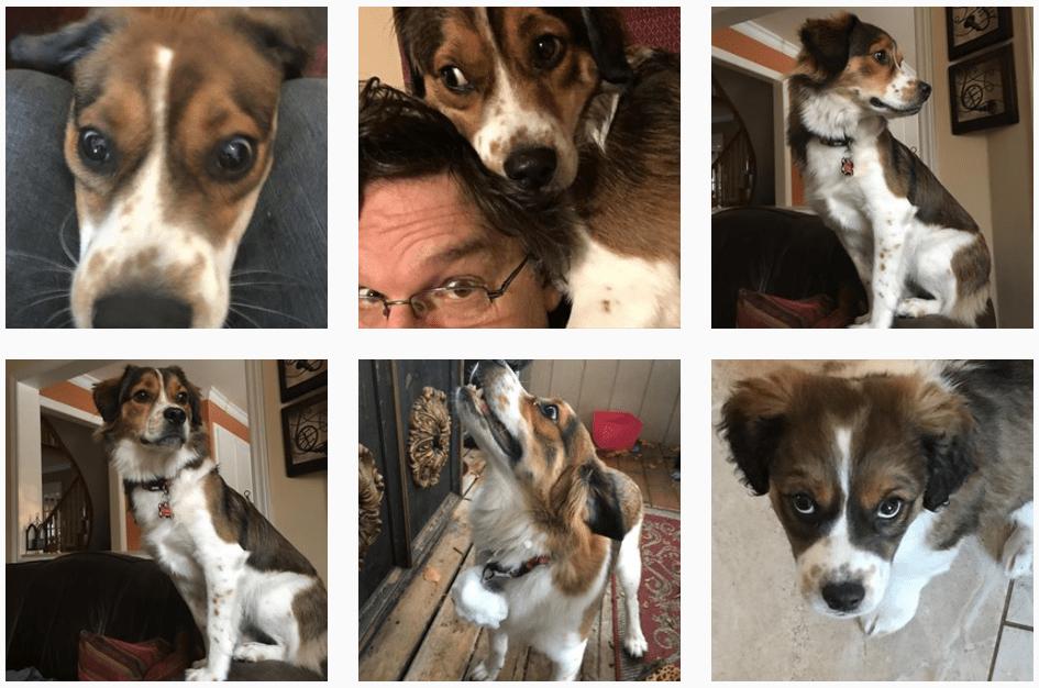 Charlie the Dog on Instagram