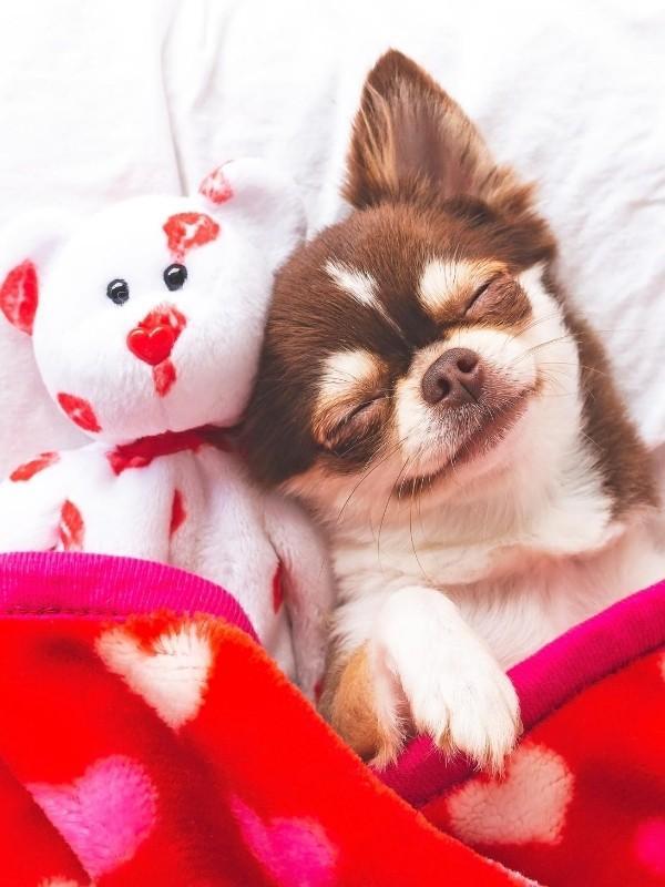 Happy Puppy Sleeping With Teddy Bear