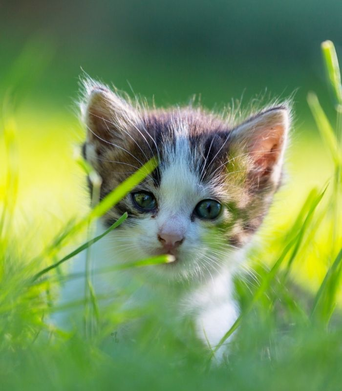 Adorable Kitten in Long Grass