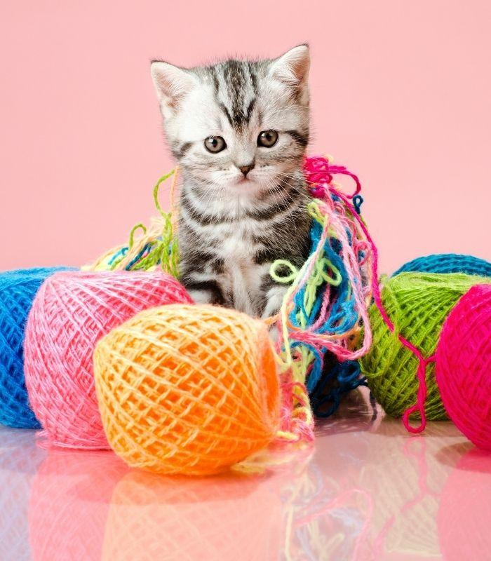 Cute Kitten Playing With Yarn