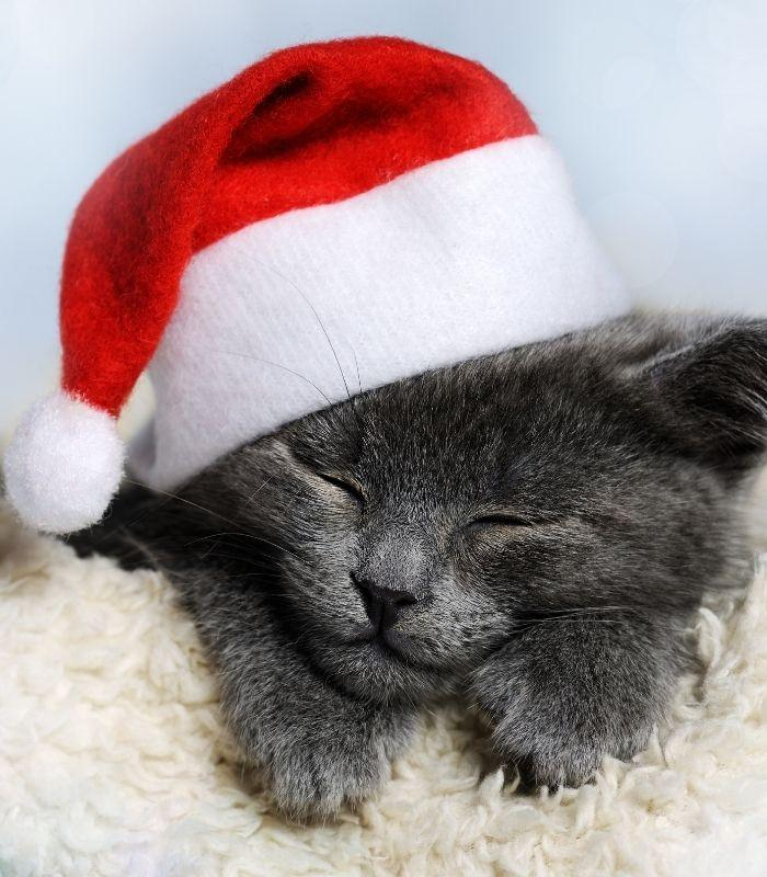 Sleepy Kitten Wearing Santa Hat