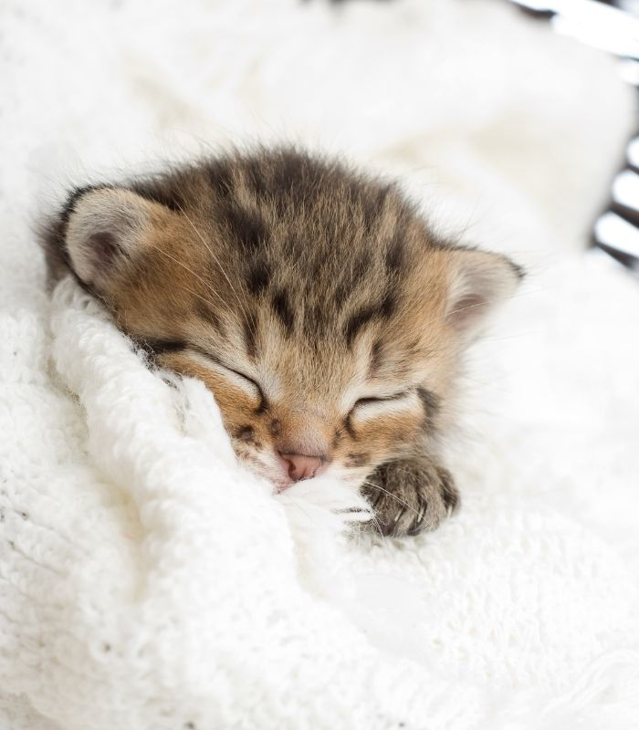 Sleepy Kitten