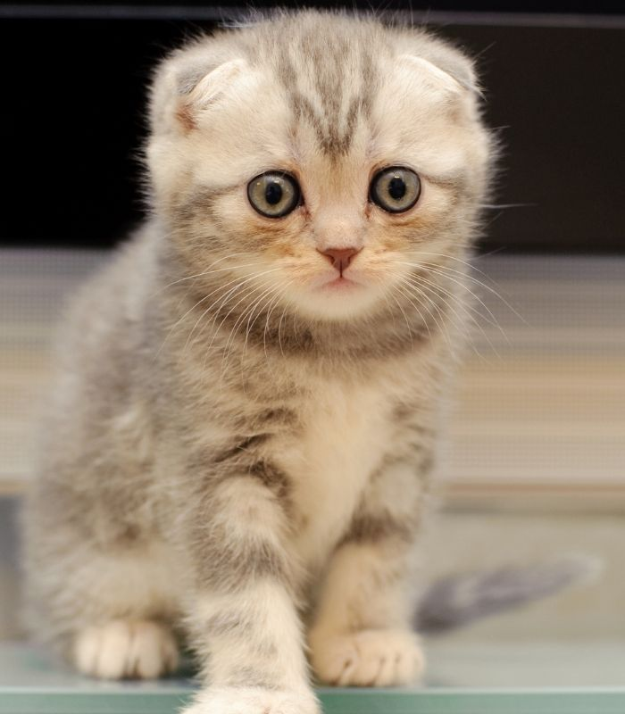 Wide Eyed Kitten Looking Frightened