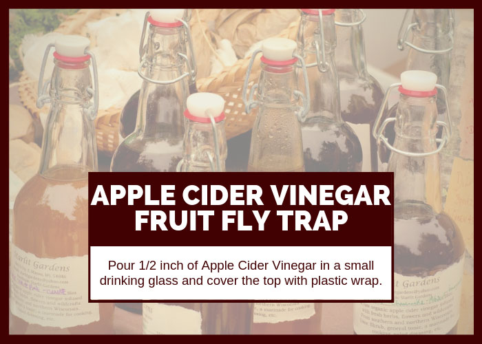 How to Get Rid of Fruit Flies Using Apple Cider Vinegar