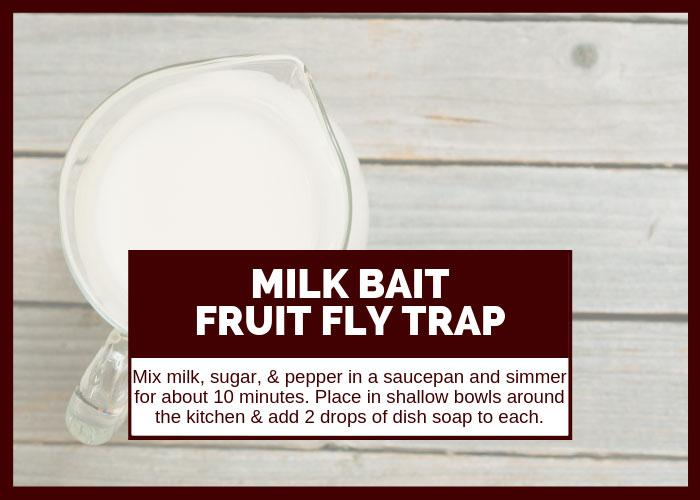 How to Get Rid of Fruit Flies Using Milk