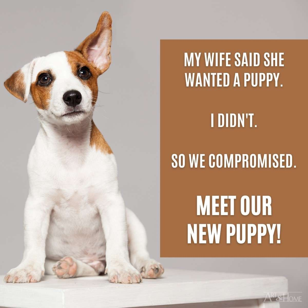 Wife New Puppy Compromise MEME