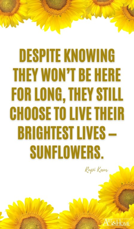 Despite knowing they won't be here for long, they still choose to live their brightest lives — sunflowers.  Rupi Kaur quote