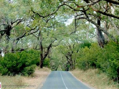 To Otway National Park 5