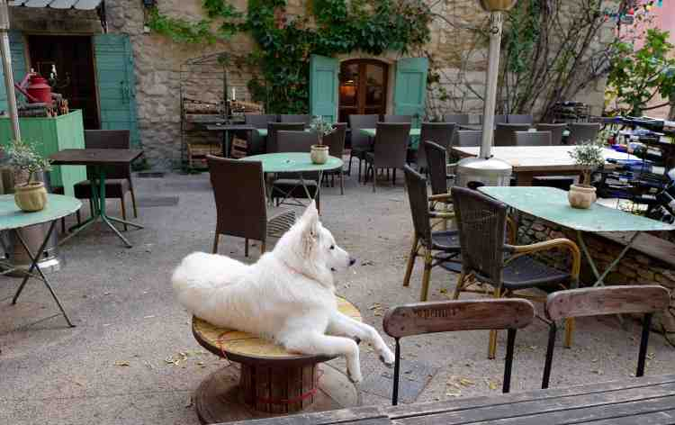 Usually it's cats, here's a dog in Provence