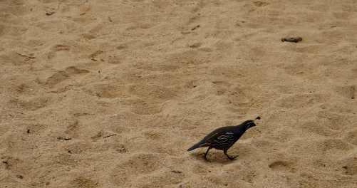 birds abel tasman