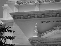 Black and white photo of the Natural History Museum building details