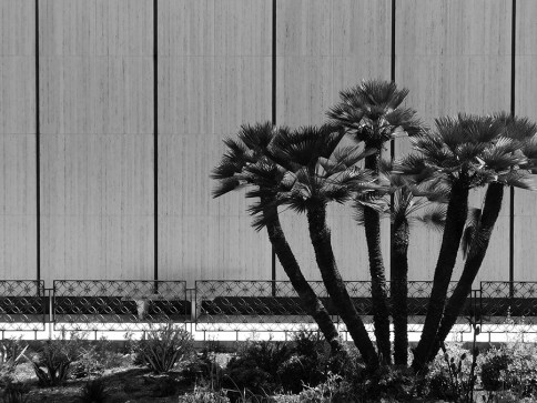 Black and white photo of a wall of the Timken Gallery flanked by a small palm tree