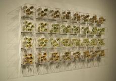 Summer Field, 2009, Ceramics, Plexiglas, Plexiglas rods, 10x10x10 cm. ea