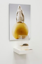 unfired clay, asian pear, photo, wood, plexi