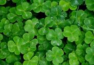 Ivy Sanders Schneider– Saint Patrick, patron saint of Ireland, is commonly associated with his eponymous holiday, the color green, shamrocks, and for driving the snakes out of Ireland. However, Patrick, […]