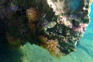 Still underwater life