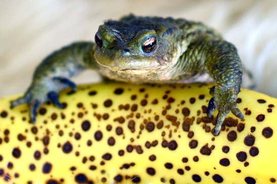 artborghi-toad-3a