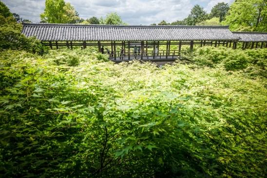 Ryoan-ji Temple, Kyoto
