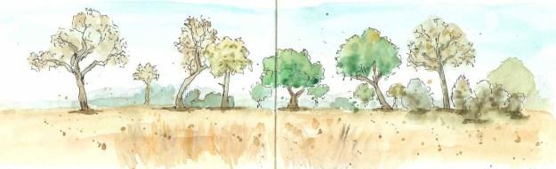 Zambia Landscape