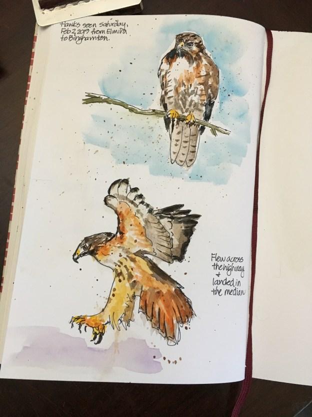 Hawks along the highway