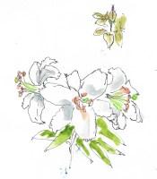 Parnell Garden flowers