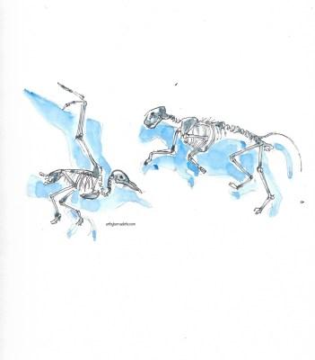 Skeletons in motion