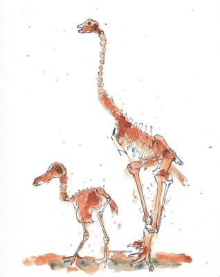 Museum skeletons