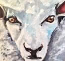 Gary the Sheep Acrylic on Canvas 16x16 €200