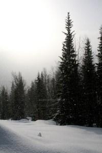 Västerbotten / Matsdal - Snön faller och vi med den