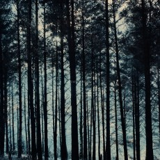 Uppland / Bålsta - Among The Pines