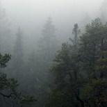 High Coast / HC trail - Köpmanholmen - Rainy Day