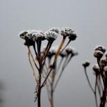 cjosefsson_artbycost_photo_frost_II_snipen_20201122_DSC_0455_watermark_wp