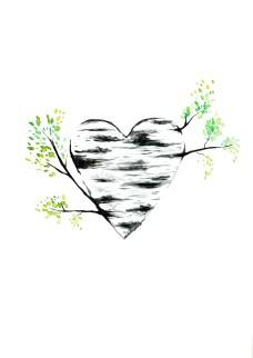 Birch heart 25$ A4 Print