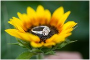 engagement-ring-photo-1024x686