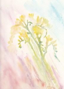 watercolour painting of Freesias Sweet Perfume