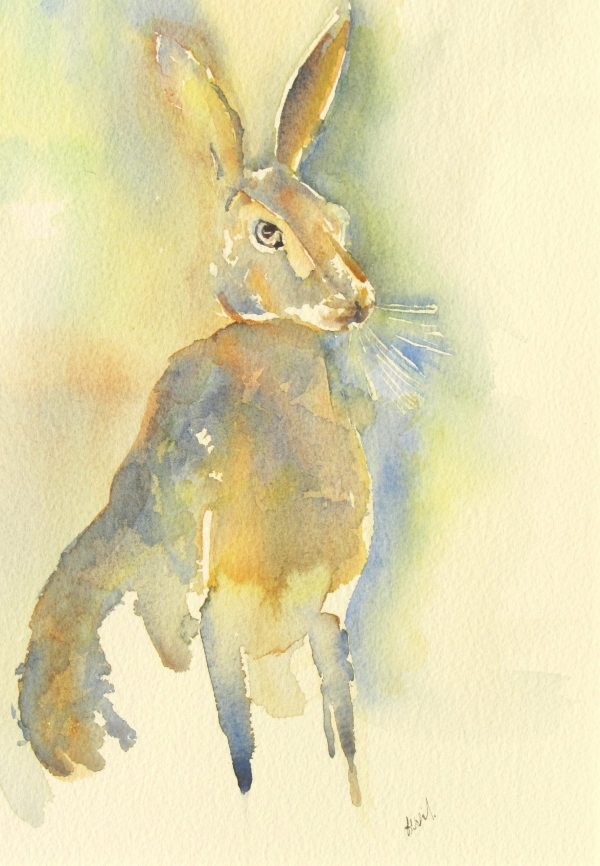 Lots of texture in this watercolour of a Hare, upright and alert. Sandy yellows and golden browns make up the warm colour palette.