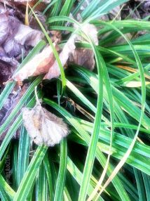 Grass and Leaves