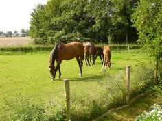 horses resized