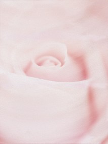 Rose Oil #1