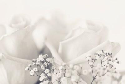 Rosy white