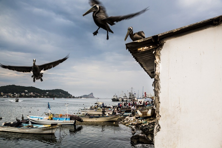 Image: Pelican Birds. In their quest for fresh seafood, Pelicans glide from rooftop in this amazing photo by photographer Matt Mawson