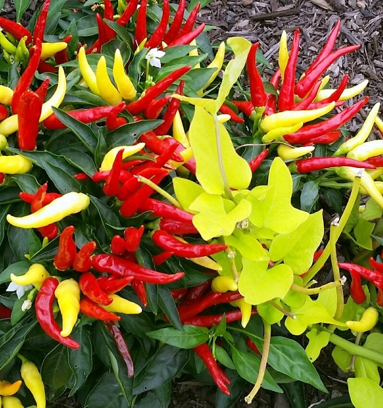 Image: Red, Yellow, and Green by La keysha Edwards is second place winner of the Artcentron Flowers We Love Photo Contest