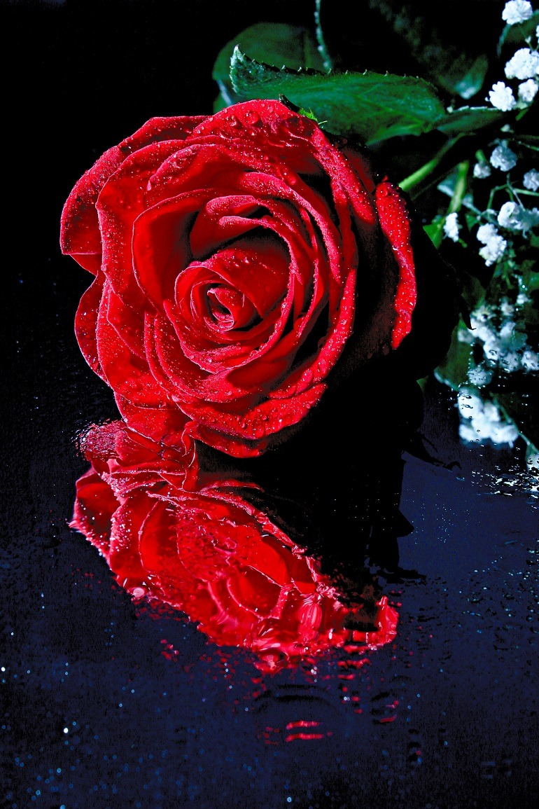 Image: Red Rose Reflection by Martin Smith is first place winner of Artcentron Flowers We Love Photo Contest.