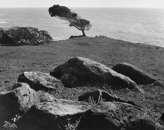 Image: At Timber Cove- North Coast- California, a landscape photograph by Ansel Adams sold during Bonhams photography Auction