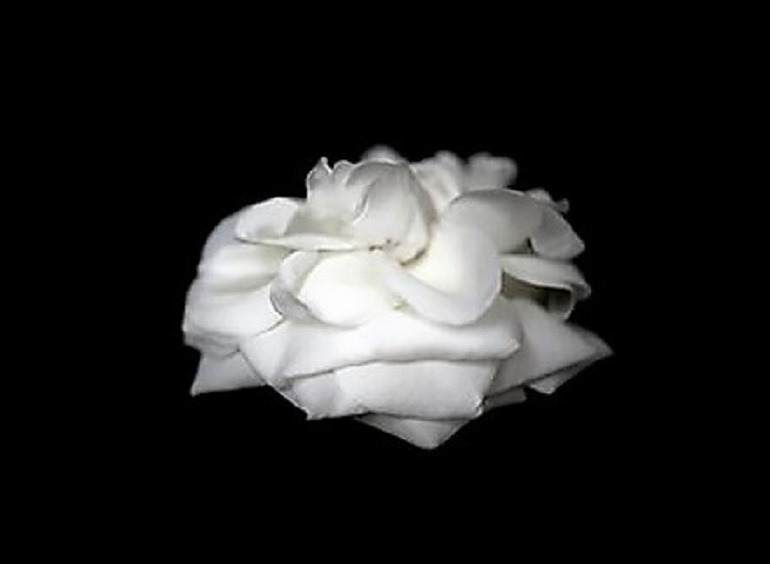 Image: Flower I, a black and white photograph by Vittorio Gui represents his quest for spirituality through photography