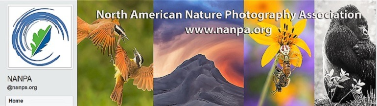Image: A photo collage on the Facebook page of North American Nature Photography Association Group, one of the Facebook Photography Groups that provide Photography tutorials and photography tips for aspiring and amateur photographers