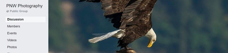Image: Photograph of an American Eagle in flight on the banner of PNW Photography Group, one of the Facebook Photography Groups that provide Photography tutorials and photography tips for aspiring and amateur photographers
