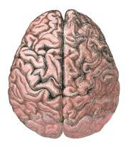 Cerebral_lobes r2 180px