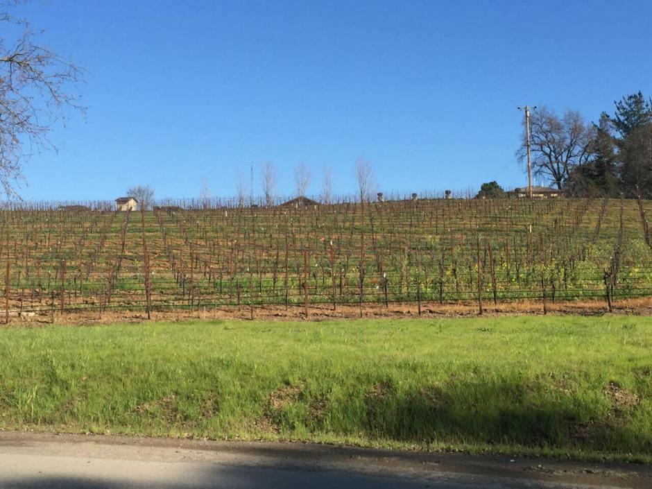 150122 01a California champagne flat vineyard en route IMG_3421