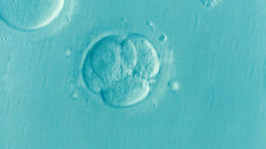 mosaic-embryos